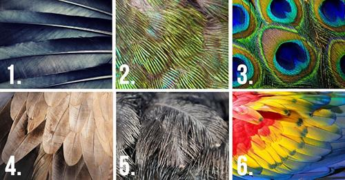 The Feather Test Will Reveal Some Hidden Traits Of The Personality of Yours 1