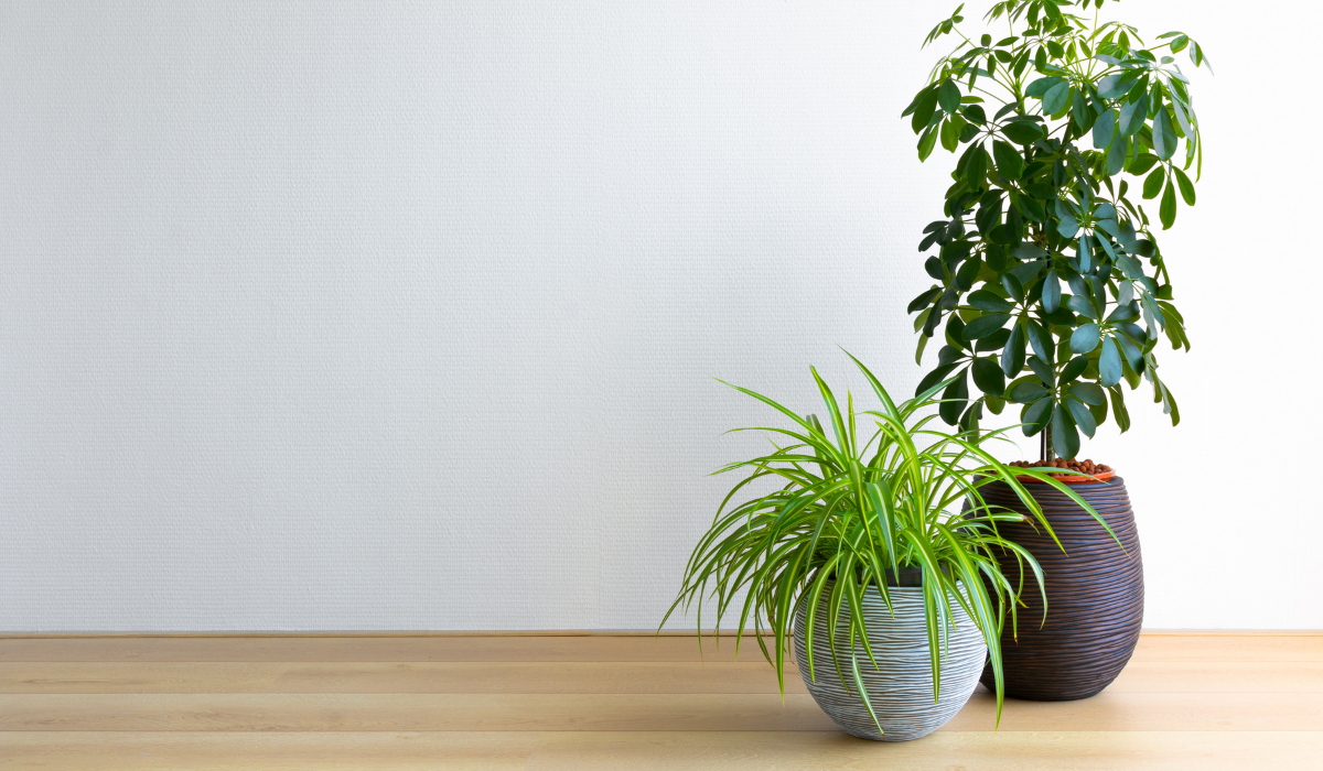 The Best Houseplant for You! According to Your Horoscope