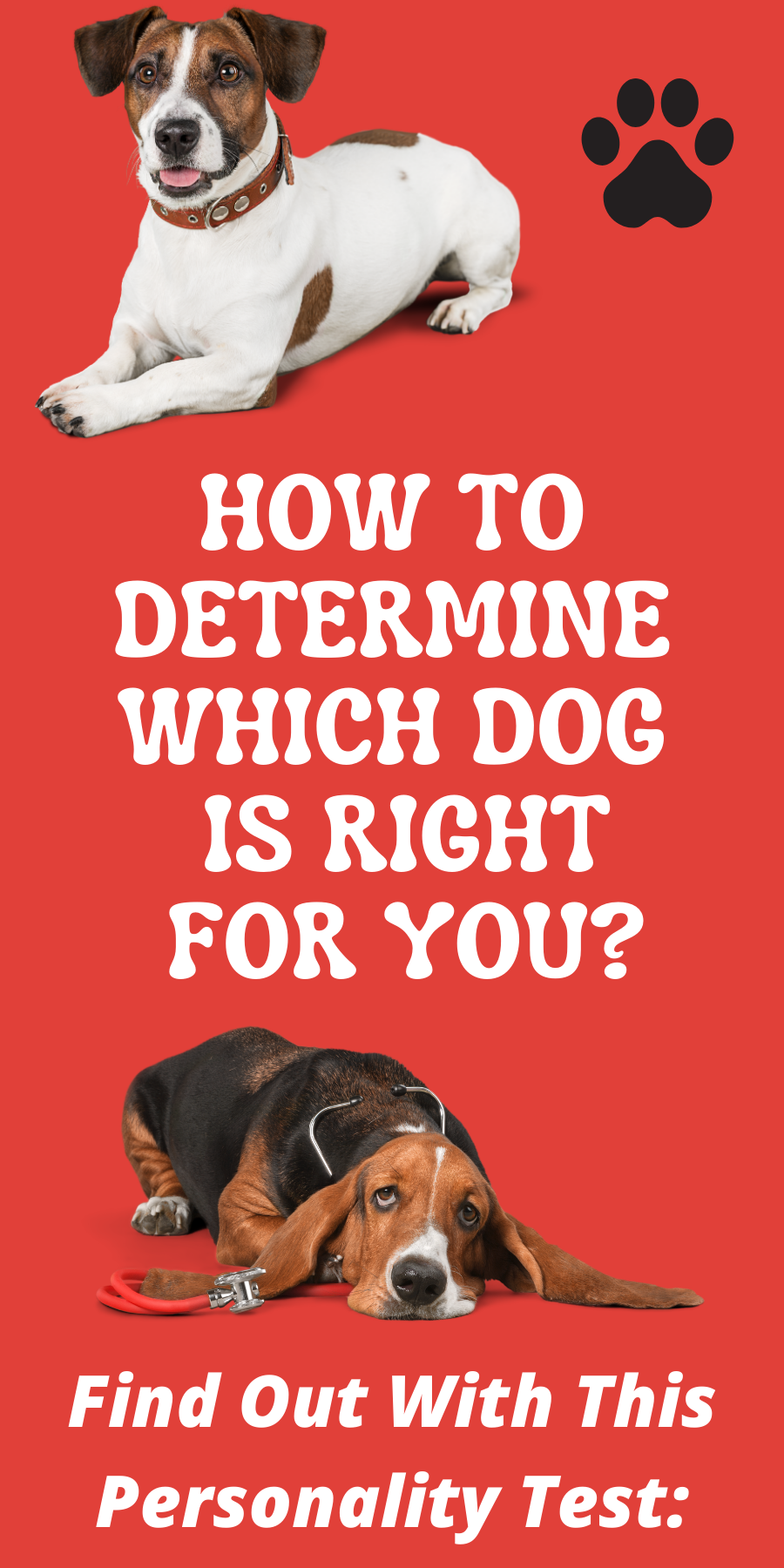 How To Determine Which Dog Is Right For You? According To Your Personality Type! 1