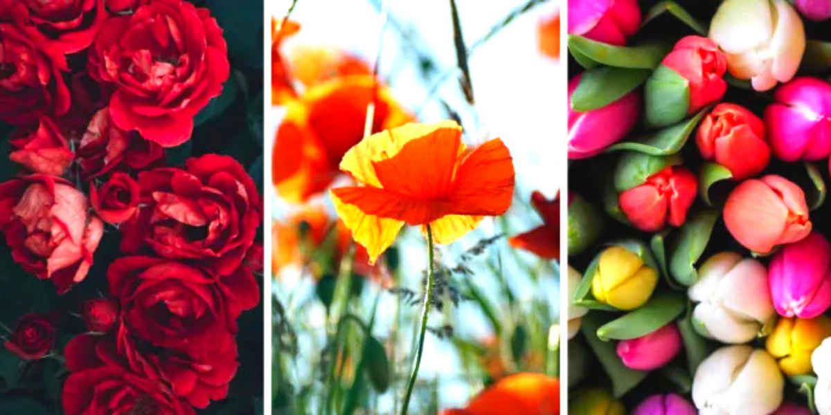 Select Your Favorite Flower! Learn More About Your Personality, Your Life, and Your Challenges: