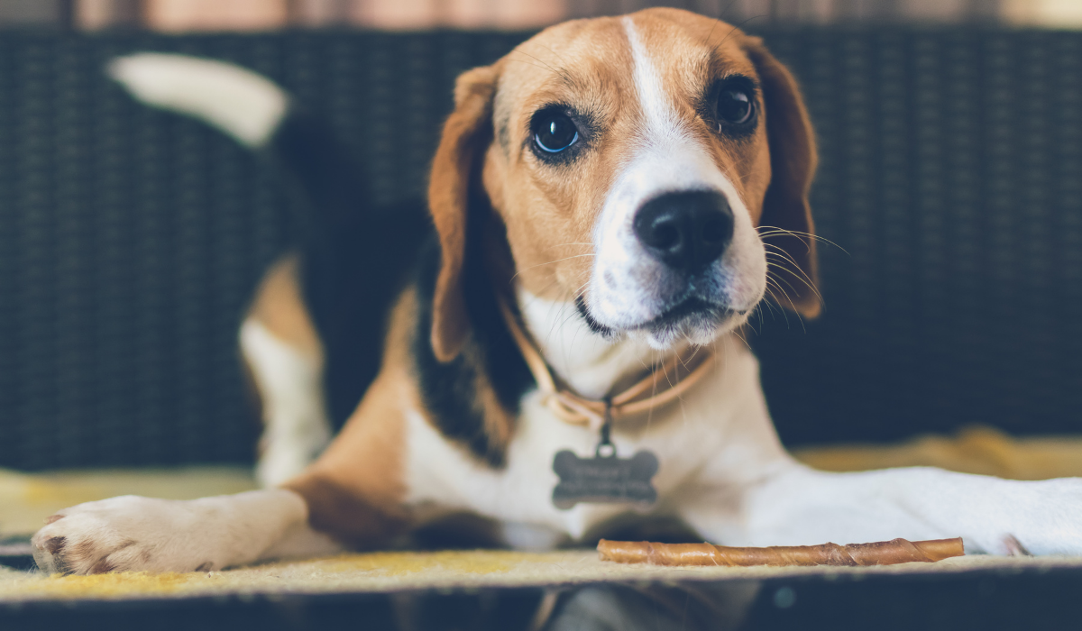How To Determine Which Dog Is Right For You? According To Your Personality Type!