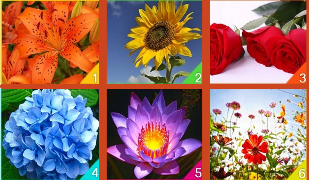 Test: Choose the flower that most attracts you! It Represents Your Spirit: