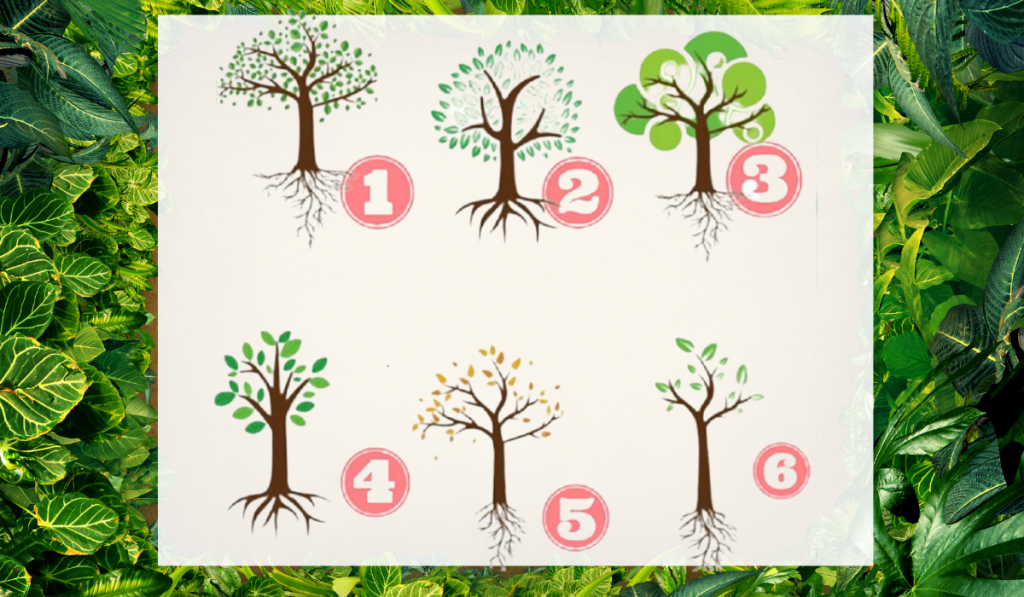 Select a Tree: The Roots Can Say a Lot About Your Life! 1