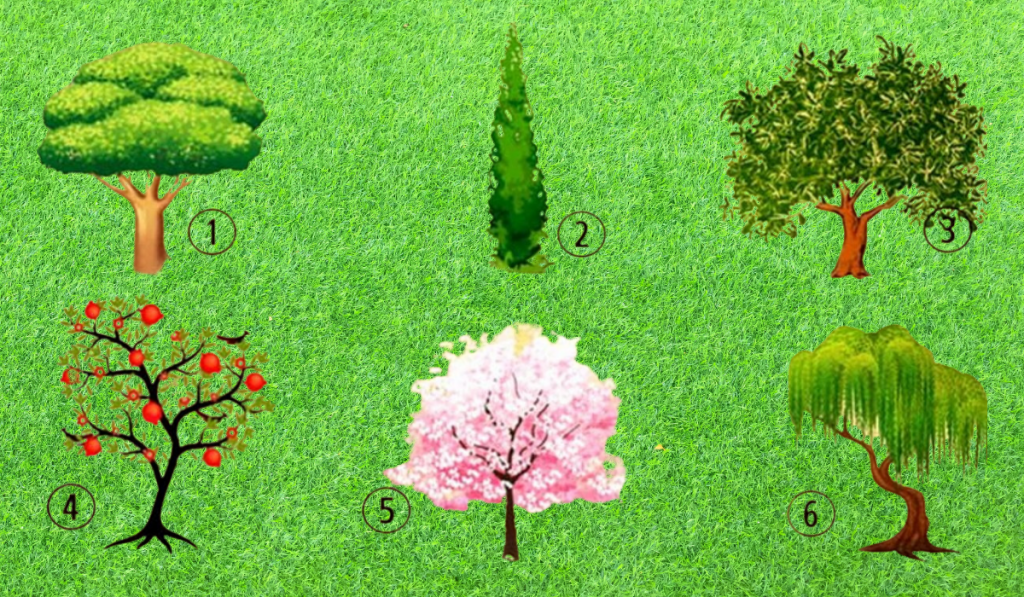 Choose a Tree You Would Plant in Your Garden and Find Out Something For Yourself! 1